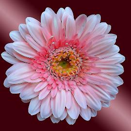 flower digital by Asif Bora - Digital Art Things