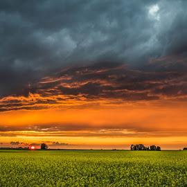 Prairie sunset by Josh Gogol - Landscapes Sunsets & Sunrises ( clouds, wideopen, canola, sunset, prairie,  )