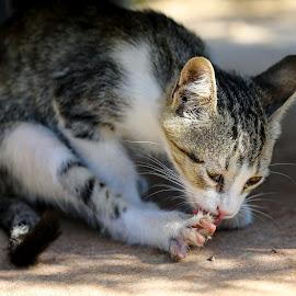 by Veli Toluay - Animals - Cats Kittens ( kedi, kedi yavrusu )