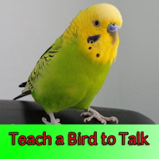 Teach a Bird to Talk
