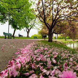 by Michael Last - City,  Street & Park  City Parks