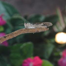 Blankenberge 2013 by Kim Rogge - Animals Amphibians