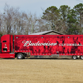 trucking for a Purpose carrying the Clydesdale Horses by Terry Linton - Transportation Other (  )