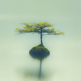 Misty Dream by Carrie Cole - Nature Up Close Trees & Bushes ( water, sony nex 7, fairy lake, stump, canada, may 2013, lake, landscape, carrie cole, port renfrew, tree, nature, vancouver island, tree growing on stump, fir tree, westcoast, bc, british columbia )