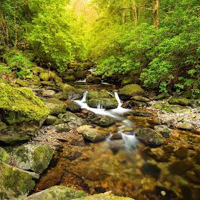 Killarney Forest by Jirka Vráblík - Landscapes Forests ( water, ireland, killarney, waterfall, kerry )