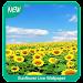 Sunflower Wallpaper Icon