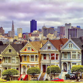 The Painted Ladies of Steiner Street by Lee Molof - Buildings & Architecture Architectural Detail