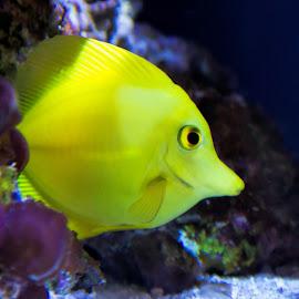 Hello Sunshine! by Kimmi Walrath Doerr - Animals Fish ( water, nature, fish, under the sea, animal )
