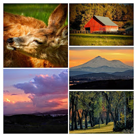Klamath Collage by Ilene Kalus - Digital Art Places ( oregon, home, my view, collage, klamath falls )