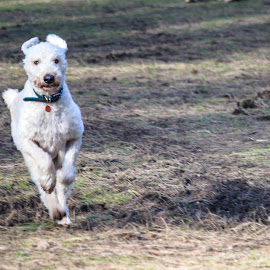 Catching up! by Sam Moody - Animals - Dogs Running