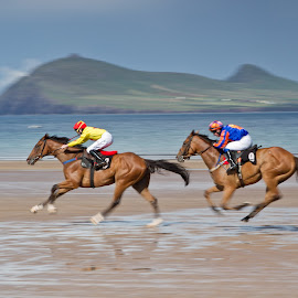 Beal Bán Races by Judy Mulholland - Sports & Fitness Other Sports ( dingle horse racing kerry ireland beach,  )