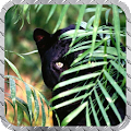 Black Panther Pack 2 Wallpaper APK for Ubuntu