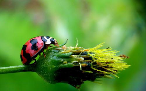 Mendaki by Adnan Hidayat Prihastomo - Instagram & Mobile Other ( macro, ladybug, insect )