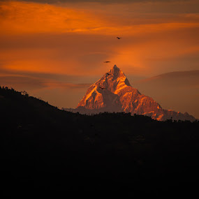 Last light on Fishtail at Fewa lake by Vorravut Thanareukchai - Landscapes Mountains & Hills ( last light, sunset, beautiful, fewa, landscape, fish tail mountain, nepal )