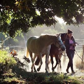 Promenade du matin by Ramade Genevieve - Animals Horses (  )