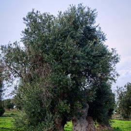 ...due  by Domenico Liuzzi - Nature Up Close Gardens & Produce