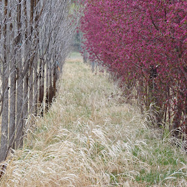 by Laurie DeMent - Nature Up Close Trees & Bushes