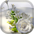 Download White Roses Wallpaper APK for Laptop