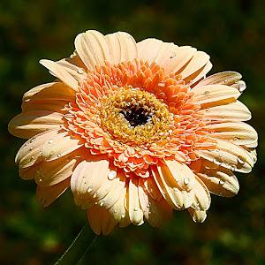 Gardena orange.jpg