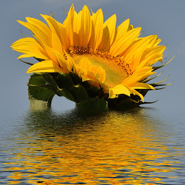 nice sunflower by LADOCKi Elvira - Digital Art Things