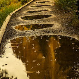 Reflection on the Trail by Judi Kubes - Nature Up Close Water ( water, reflection, mud, mountain, tree, trail, bubbles, raindrops, puddle,  )