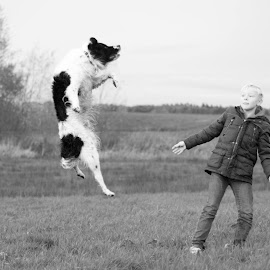 Jump!!  by Joyce Dales - Animals - Dogs Playing