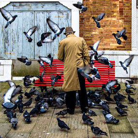 The Birdman of Venice by Gary Beresford - City,  Street & Park  Street Scenes ( bird, pigeon, street, venice, italy )