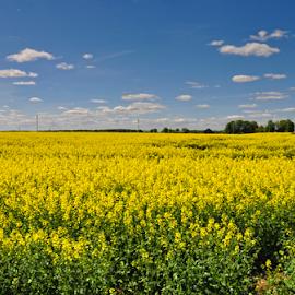 by Irena Gedgaudiene - Landscapes Prairies, Meadows & Fields
