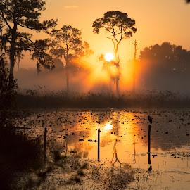 Sunrise on the Lake by Lynn Kohut - Landscapes Sunsets & Sunrises ( waterscape, freshwater, florida, lake, sunrise, sun,  )