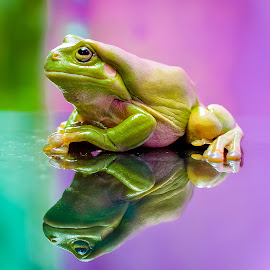 by Joy Advent - Animals Amphibians