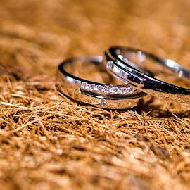 Couple rings by Bom Bo - Wedding Details ( love, ring, platinum, diamond, white, weding, couple, people, golden, circle, pwc79 )