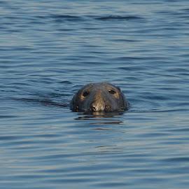 hello by Penny Wallace - Animals Sea Creatures