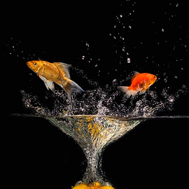 jumper fish by Tt Sherman - Digital Art Things ( orange, splash, fish )