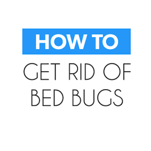 How To Get Rid of Bed Bugs??
