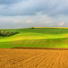 Spring colors. by Vladimir Vocelka - Landscapes Prairies, Meadows & Fields ( field, spring colors, south moravia, czech republic, agriculture. )