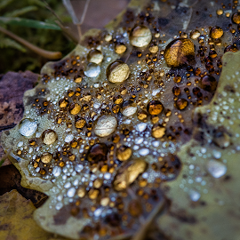 A u t u m n - J e w e l s by Manu Heiskanen - Uncategorized All Uncategorized ( water, diamonds, color, drops, jewels, leaf, leaves, paulinawolekpardon )