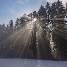 Winter sunrays by Stanislav Horacek - Landscapes Forests