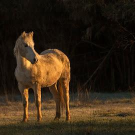 Morning by Blaž Ocvirk - Animals Horses