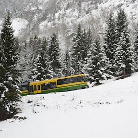 Nature & Machine  by Willem Pretorius - Landscapes Travel ( winter, mountain, snow, train, trees )