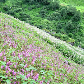 VALLEY OF FLOWERS by Debangshu Sarkar - Landscapes Travel