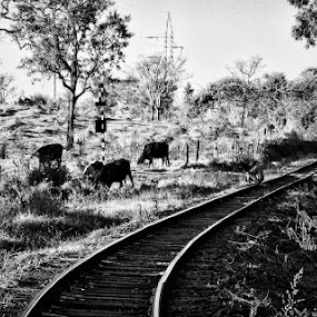 by Gilberto Jr. - Travel Locations Railway