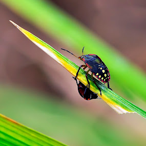 by Agus Wahyudi Photoworks - Animals Insects & Spiders