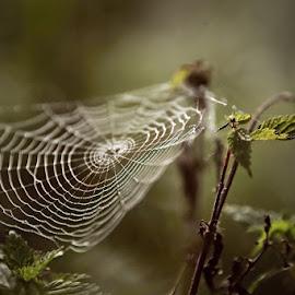 *** by Katka Kozáková - Nature Up Close Webs ( spider web, foggy, autumn, morning )