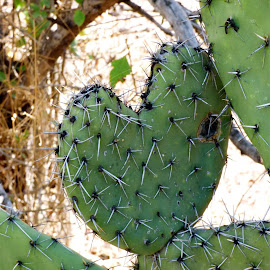 CORAZON DE CACTUS by Jose Mata - Nature Up Close Trees & Bushes