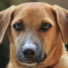 Jules by Vivek Chethan Muliya - Animals - Dogs Portraits ( animals, dogs, portraits, dog, mutt, pet,  )
