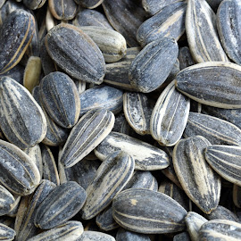Sunflower seeds background by Dipali S - Food & Drink Ingredients ( plant, raw, shell, nutritious, sunflower, appetizer, macro, nature, cooking, seeds, ingredient, roasted, closeup, flower, black, dry, seed, texture, agriculture, snack, organic, nutrition, pattern, textured, food, background, healthy, eat, vegetable, small )