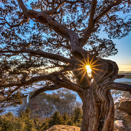 by Brad Bellisle - Nature Up Close Trees & Bushes ( sunburst, gibraltar, tree, sunset, cedar, sunrise, lodi )