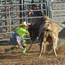 Rodeo Bull Fighter - 0851 by Twin Wranglers Baker - Sports & Fitness Rodeo/Bull Riding (  )