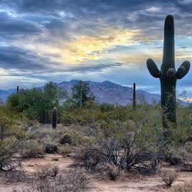 Bright Spot by Charlie Alolkoy - Landscapes Deserts ( arizona, tucson )
