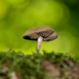 on the hive by Radisa Miljkovic - Nature Up Close Mushrooms & Fungi
